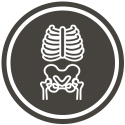 X-Ray Brown Icon